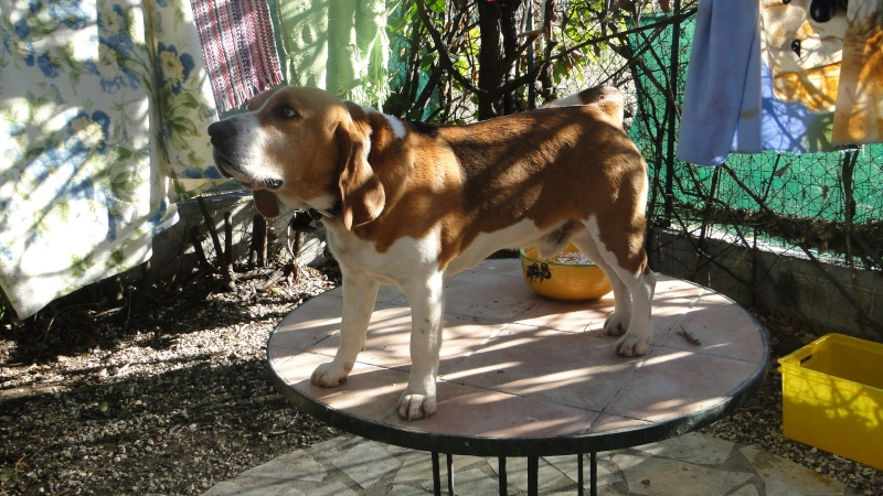 MON FILS AIME LES OISEAUX............. Beagle15