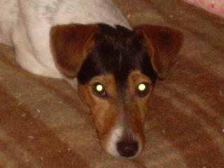 Aidez nous à sauver les chiens de béthune Belle_10