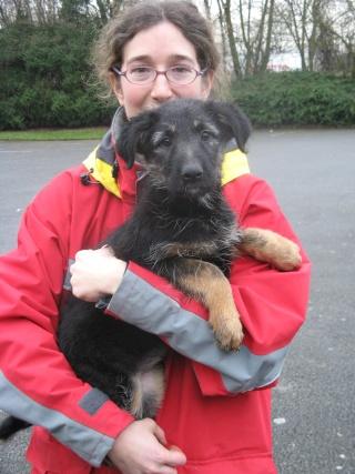 Aidez nous à sauver les chiens de béthune Chiot10