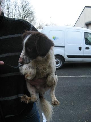 Aidez nous à sauver les chiens de béthune Pap_211