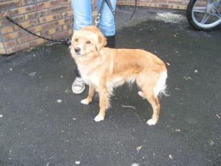 Aidez nous à sauver les chiens de béthune Tulipe11