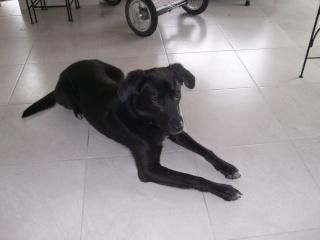 Ugoz, jeune chien Ugoz_012