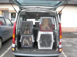 Aidez nous à sauver les chiens de béthune Voitur10