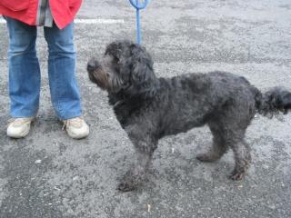 Aidez nous à sauver les chiens de béthune X_cani11