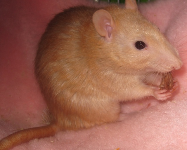 Qui a un rat Velours? Img_0224