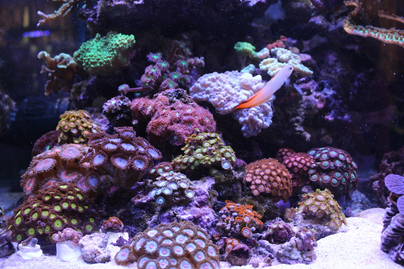 THE BILLY'S REEF - Page 36 Img_1136