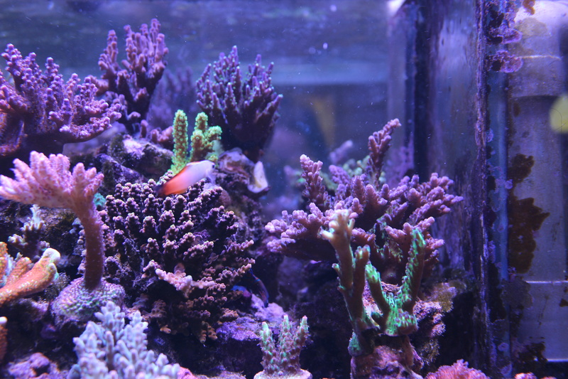THE BILLY'S REEF - Page 36 Img_1140