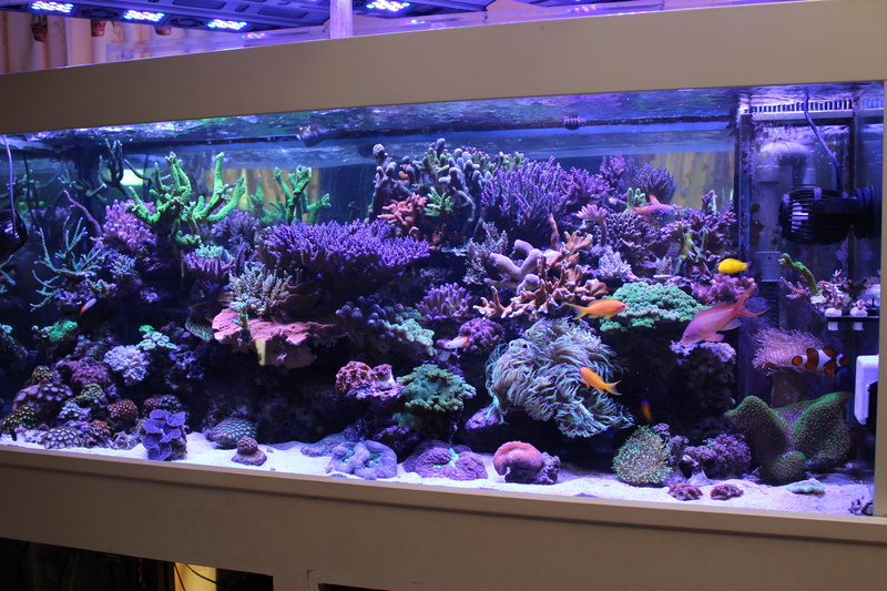 THE BILLY'S REEF - Page 36 Img_1149