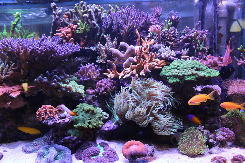 THE BILLY'S REEF - Page 36 Img_1151