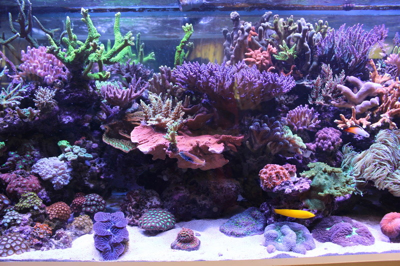 THE BILLY'S REEF - Page 36 Img_1152