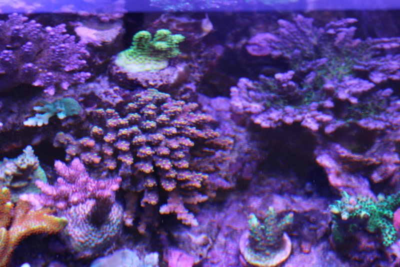 THE BILLY'S REEF - Page 36 Img_1210