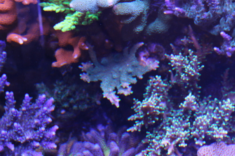 THE BILLY'S REEF - Page 36 Img_1211
