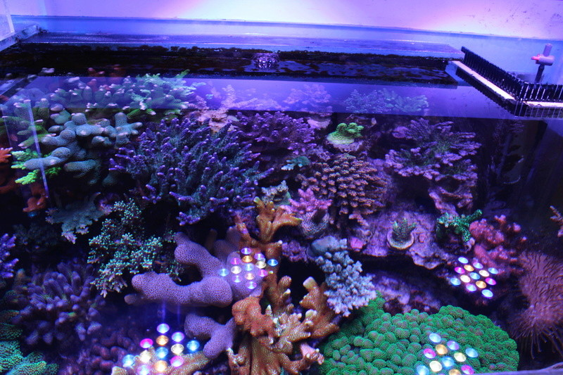 THE BILLY'S REEF - Page 36 Img_1212