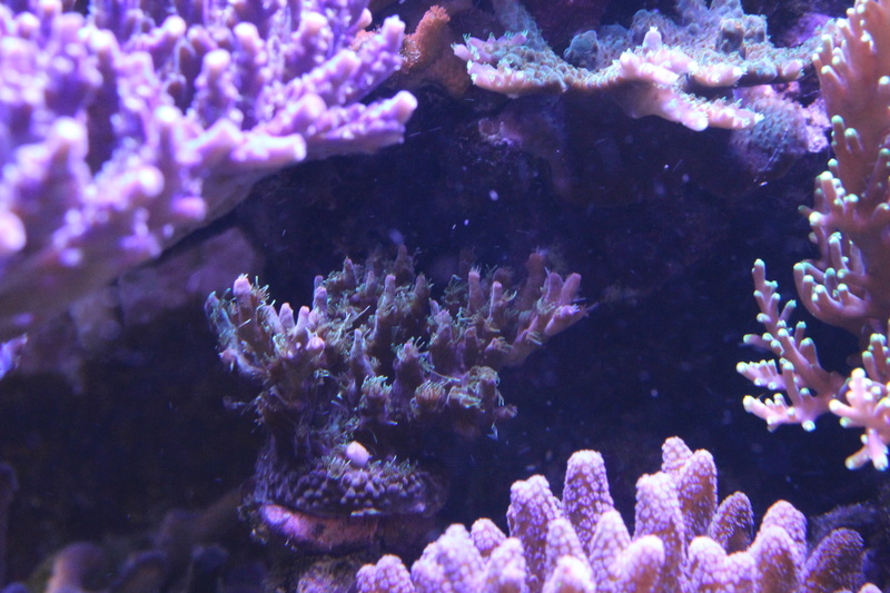 THE BILLY'S REEF - Page 36 Img_1221