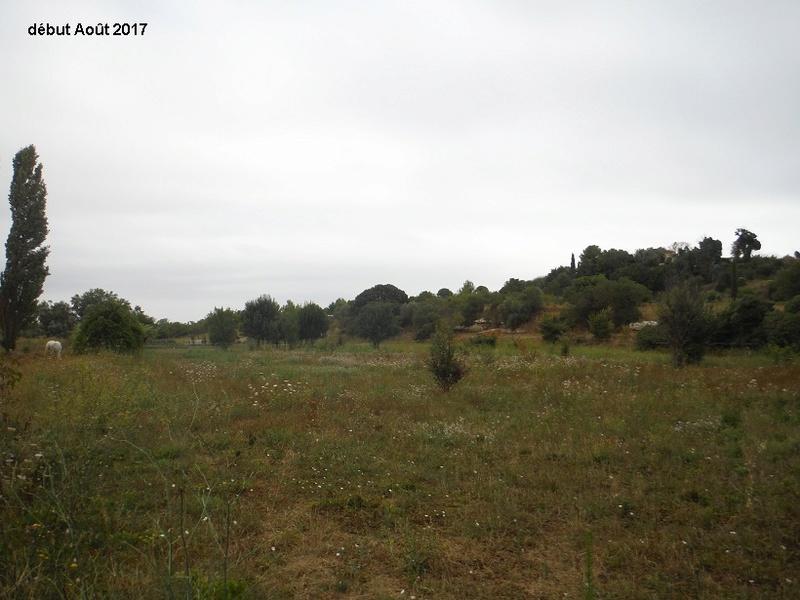 JdB de 4 hectares de pâtures dans le SUD : Avril 2019, et toujours la sécheresse... - Page 6 10013p10