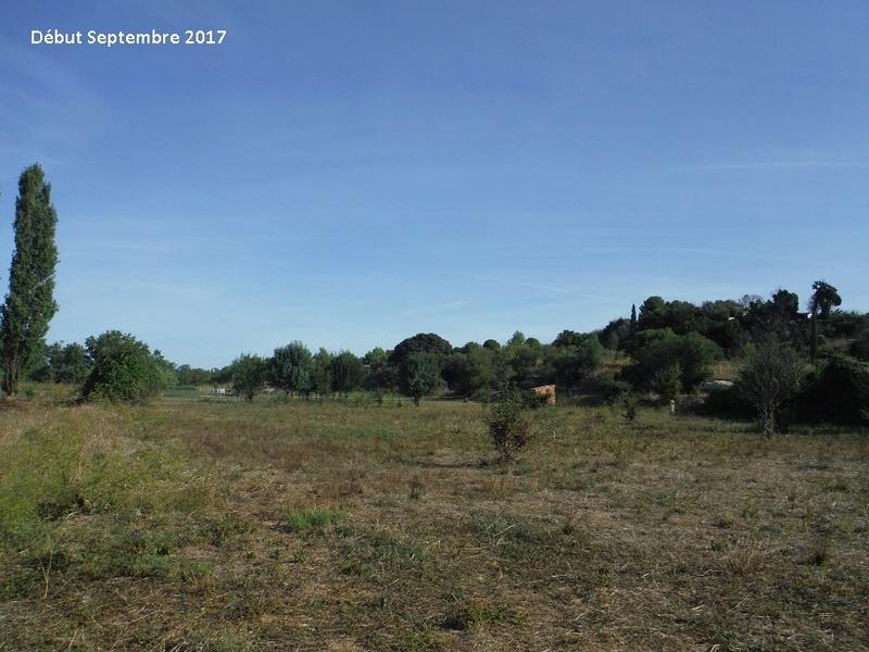 JdB de 4 hectares de pâtures dans le SUD : Avril 2019, et toujours la sécheresse... - Page 7 10014p10