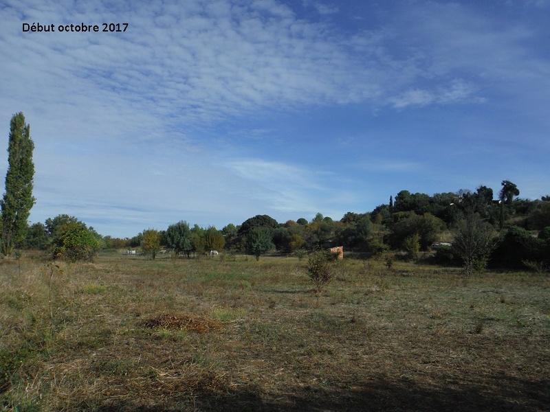 JdB de 4 hectares de pâtures dans le SUD : Avril 2019, et toujours la sécheresse... - Page 7 10015p10