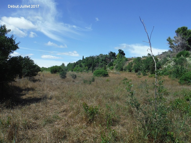 JdB de 4 hectares de pâtures dans le SUD : Avril 2019, et toujours la sécheresse... - Page 6 1012pa10