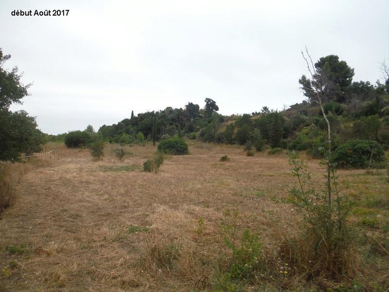 JdB de 4 hectares de pâtures dans le SUD : Avril 2019, et toujours la sécheresse... - Page 6 1013pa10