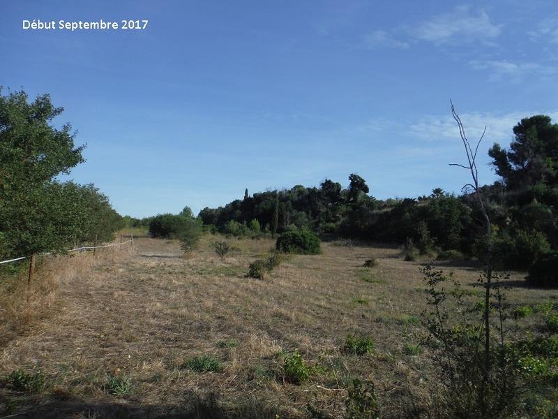 JdB de 4 hectares de pâtures dans le SUD : Avril 2019, et toujours la sécheresse... - Page 7 1014pa10
