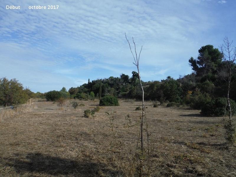 JdB de 4 hectares de pâtures dans le SUD : Avril 2019, et toujours la sécheresse... - Page 7 1015pa10