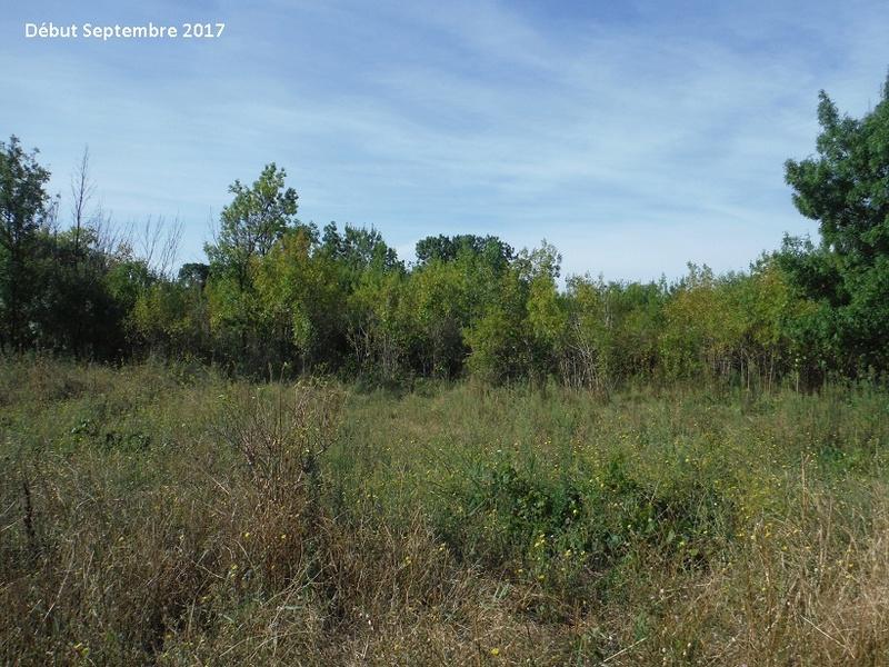 JdB de 4 hectares de pâtures dans le SUD : Avril 2019, et toujours la sécheresse... - Page 7 13014p10