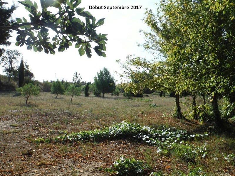 JdB de 4 hectares de pâtures dans le SUD : Avril 2019, et toujours la sécheresse... - Page 7 14014p10