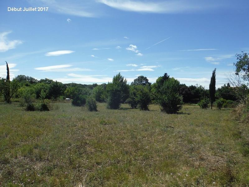 JdB de 4 hectares de pâtures dans le SUD : Avril 2019, et toujours la sécheresse... - Page 6 15012p10