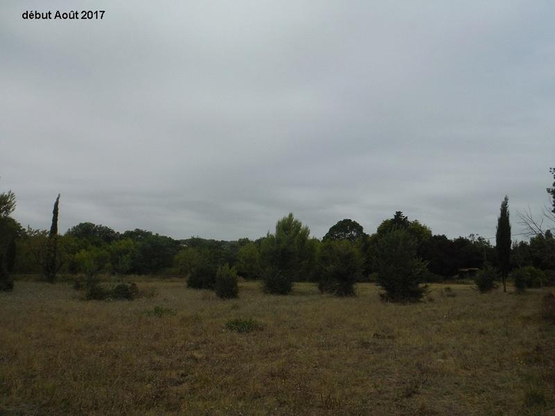 JdB de 4 hectares de pâtures dans le SUD : Avril 2019, et toujours la sécheresse... - Page 6 15013p10