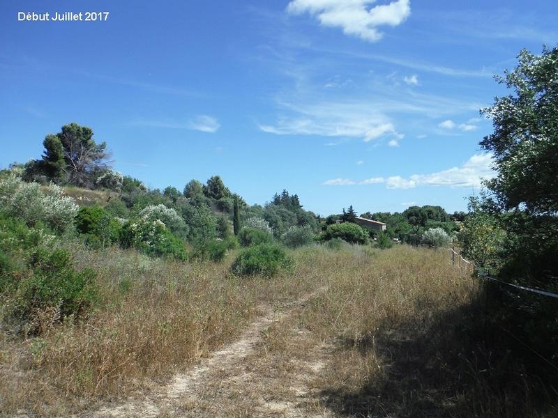 JdB de 4 hectares de pâtures dans le SUD : Avril 2019, et toujours la sécheresse... - Page 6 2012pa10