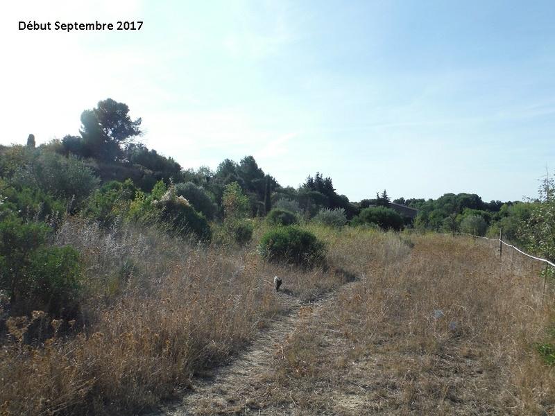 JdB de 4 hectares de pâtures dans le SUD : Avril 2019, et toujours la sécheresse... - Page 7 2014pa10