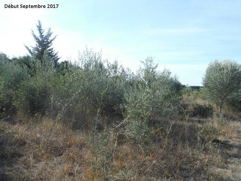 JdB de 4 hectares de pâtures dans le SUD : Avril 2019, et toujours la sécheresse... - Page 7 3014pa10