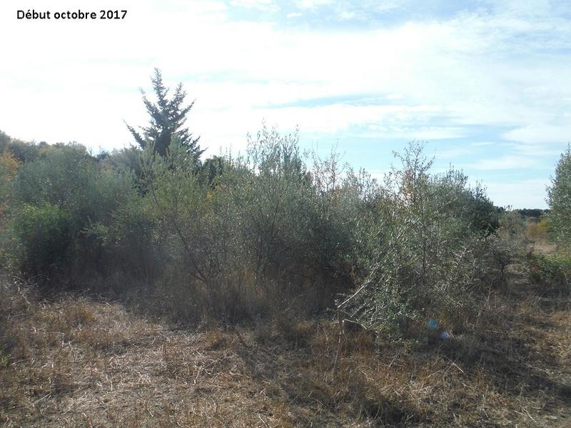JdB de 4 hectares de pâtures dans le SUD : Avril 2019, et toujours la sécheresse... - Page 7 3015pa10