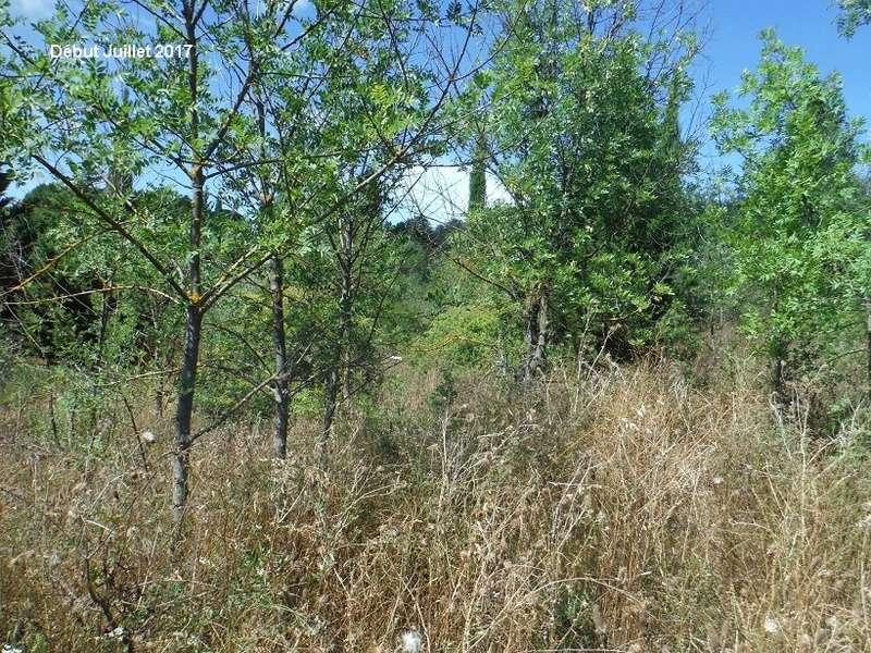 JdB de 4 hectares de pâtures dans le SUD : Avril 2019, et toujours la sécheresse... - Page 6 4012pa10