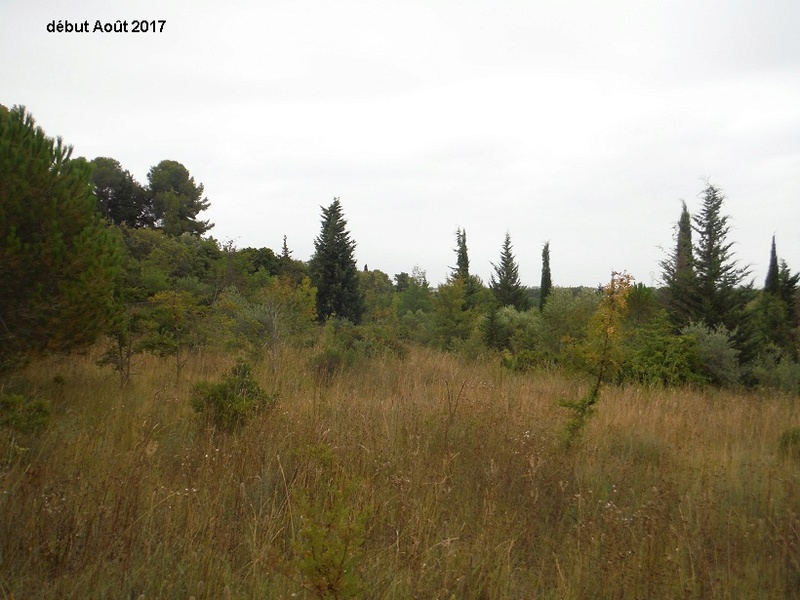 JdB de 4 hectares de pâtures dans le SUD : Avril 2019, et toujours la sécheresse... - Page 6 5013pa11