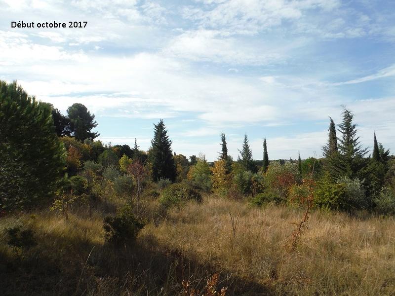JdB de 4 hectares de pâtures dans le SUD : Avril 2019, et toujours la sécheresse... - Page 7 5015pa10