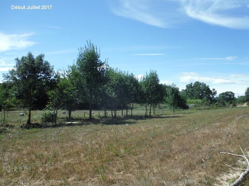 JdB de 4 hectares de pâtures dans le SUD : Avril 2019, et toujours la sécheresse... - Page 6 6012pa10