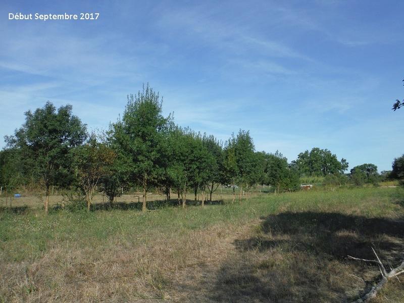 JdB de 4 hectares de pâtures dans le SUD : Avril 2019, et toujours la sécheresse... - Page 7 6014pa10