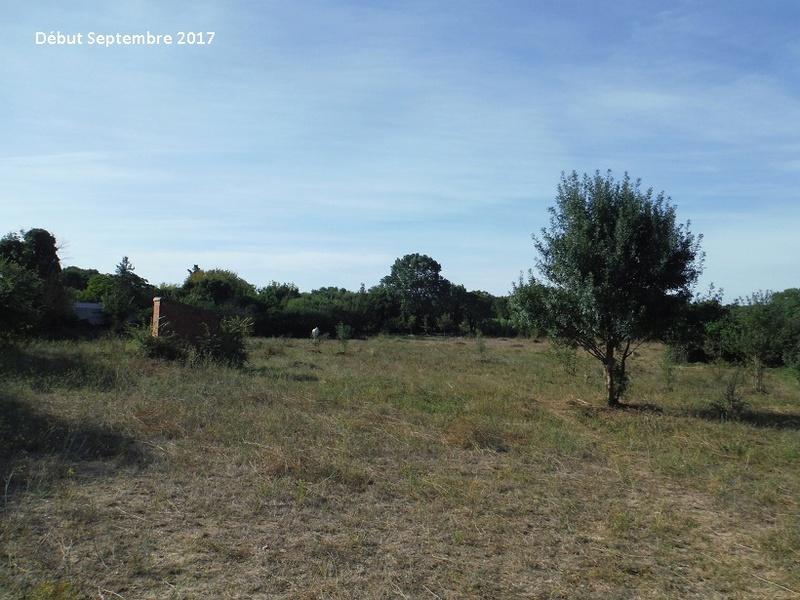 JdB de 4 hectares de pâtures dans le SUD : Avril 2019, et toujours la sécheresse... - Page 7 7014pa10