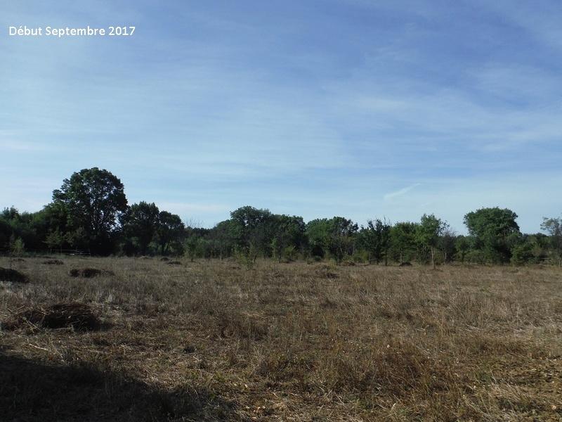 JdB de 4 hectares de pâtures dans le SUD : Avril 2019, et toujours la sécheresse... - Page 7 8014pa10