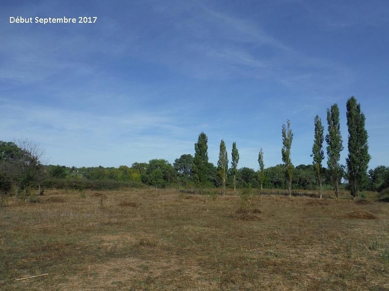 JdB de 4 hectares de pâtures dans le SUD : Avril 2019, et toujours la sécheresse... - Page 7 9014pa10