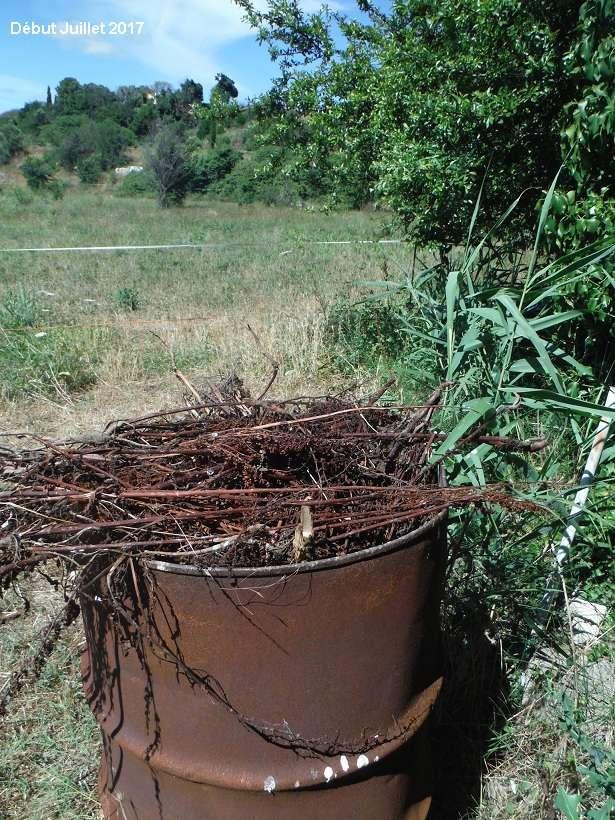 JdB de 4 hectares de pâtures dans le SUD : Avril 2019, et toujours la sécheresse... - Page 6 Dscf8518