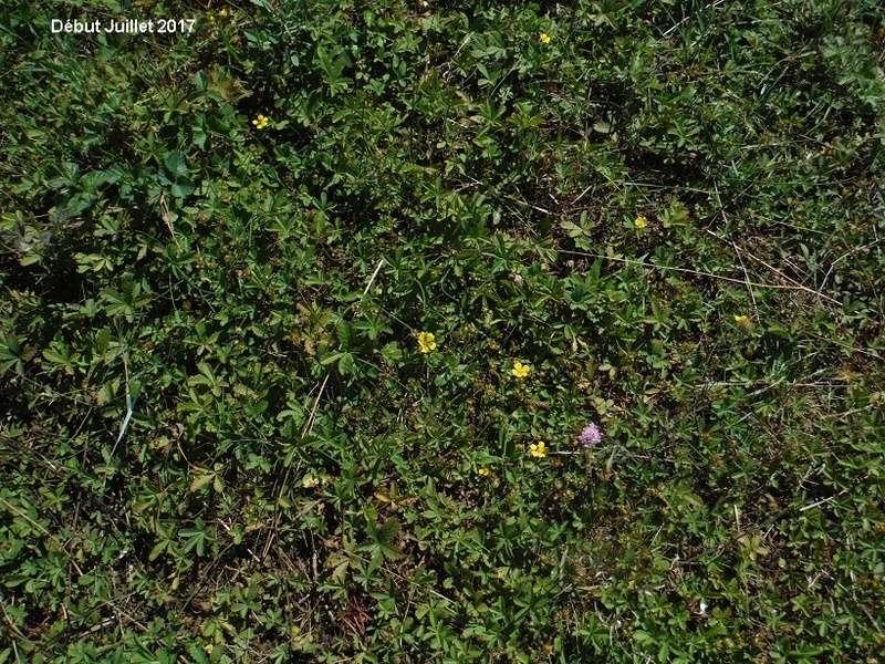 JdB de 4 hectares de pâtures dans le SUD : Avril 2019, et toujours la sécheresse... - Page 6 Dscf8520
