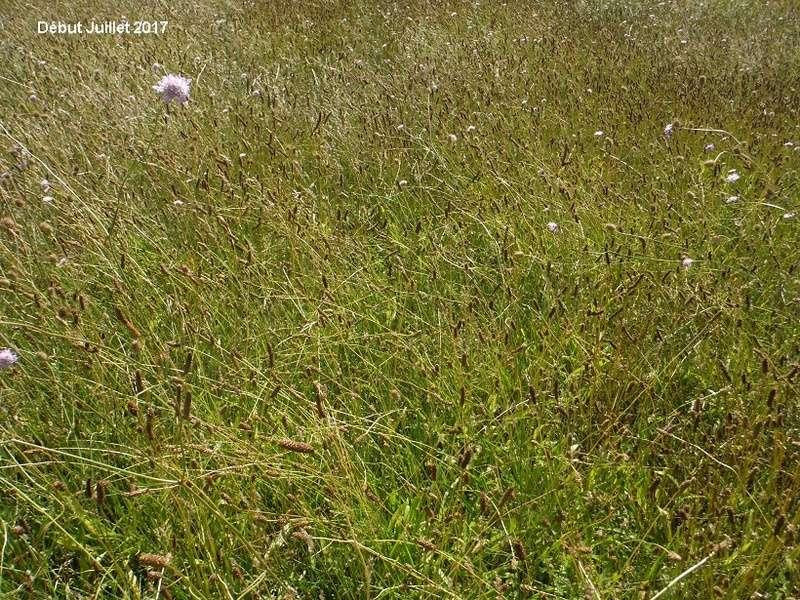 JdB de 4 hectares de pâtures dans le SUD : Avril 2019, et toujours la sécheresse... - Page 6 Dscf8521