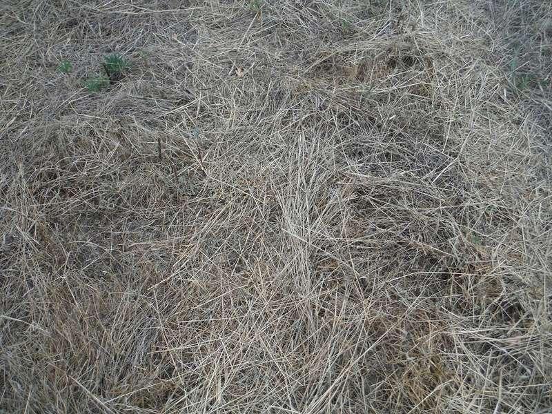 JdB de 4 hectares de pâtures dans le SUD : Avril 2019, et toujours la sécheresse... - Page 6 Dscf8814