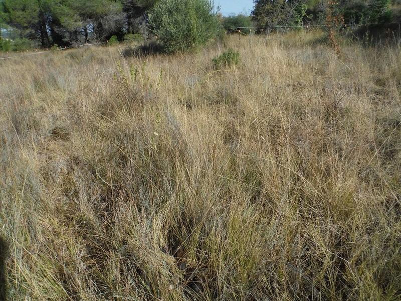 JdB de 4 hectares de pâtures dans le SUD : Avril 2019, et toujours la sécheresse... - Page 7 Octobr10