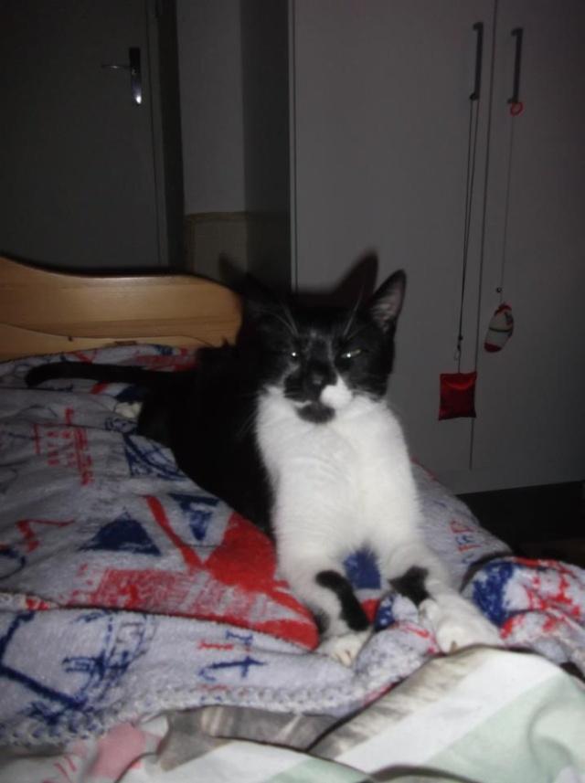 Noisette - femelle noire plastron blanc, 1 an (76) 60305910