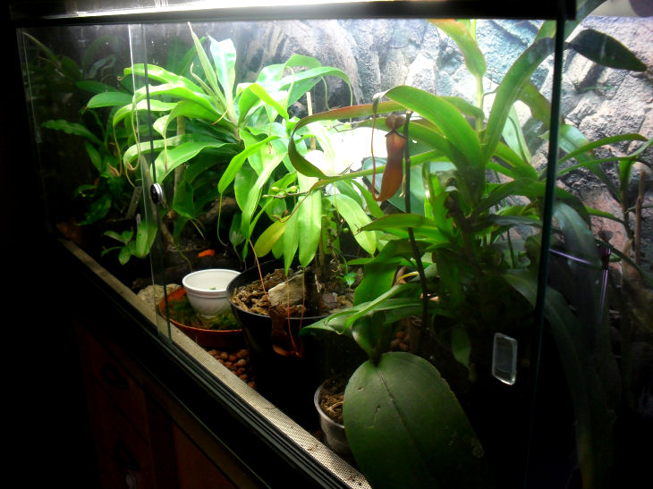 Mon terrarium de 120x50x60 13_01_12