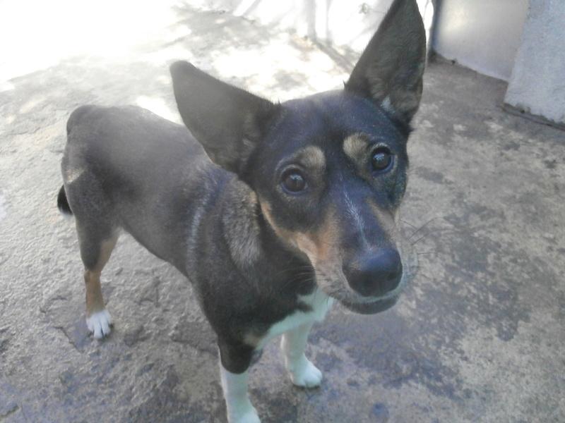 Rosabelle (chienne croisée husky) Pa076710