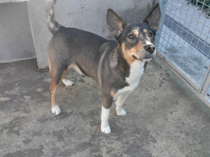Rosabelle (chienne croisée husky) Pa076711